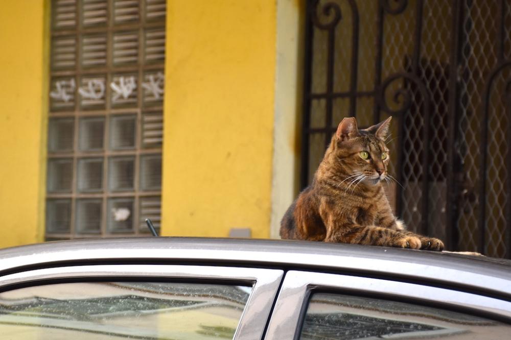 cat_puerto_rico