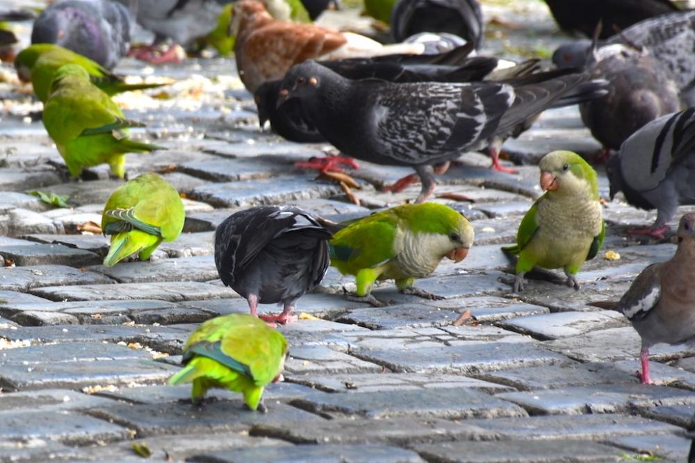 street_birds