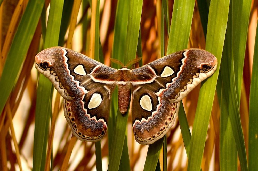Moth_sm