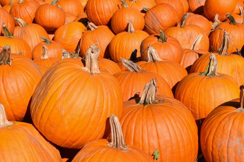 Pumpkins_sm