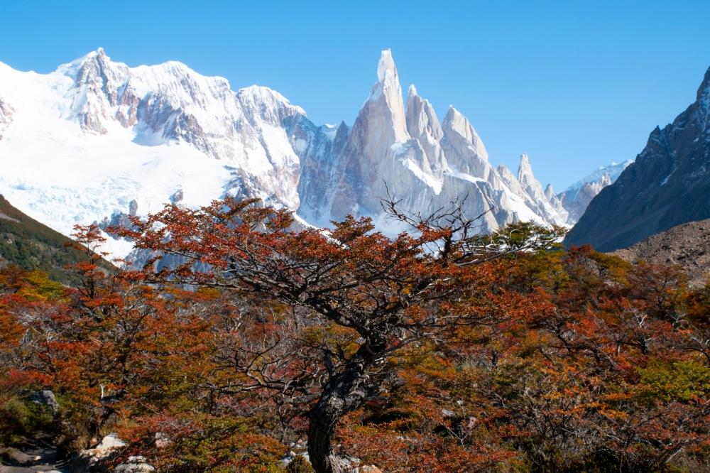 Cerro_tree_sm